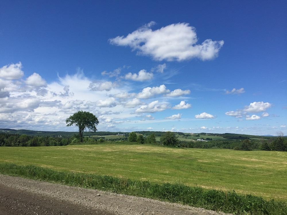 Orme majestueux, Chemin Bulwer, Martinville, Cantons-de-l'Est